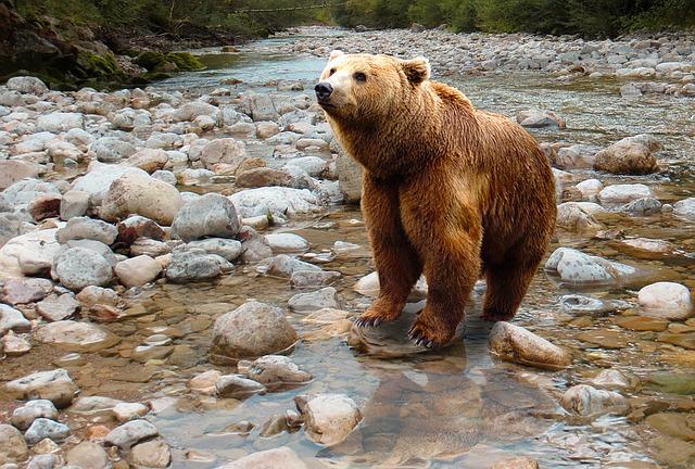 bear-1376361_640