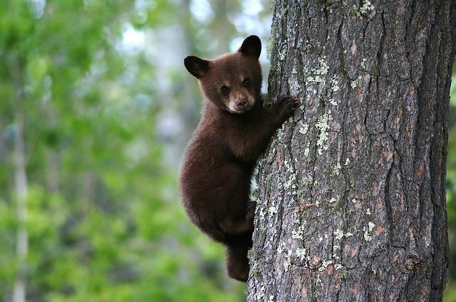 bear-79838_640